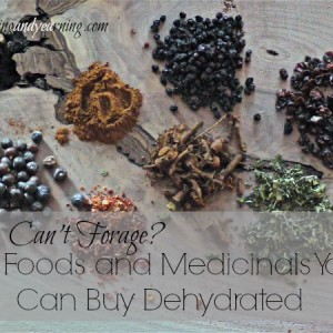 Can't Forage? 10 Foods and Medicinals You Can Buy Dehydrated