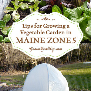 Gardening in Maine Zone 5: PLUS Tips for Other Zones from Veteran Gardeners