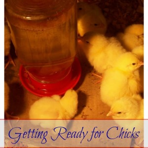 How to Get Ready for Chicks