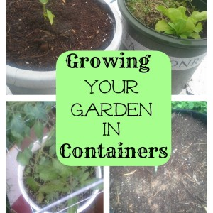 Growing Your Garden in Containers