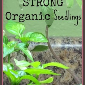 Organic Seed Starting Supplies and Tips