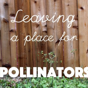 Leaving a Place for Pollinators