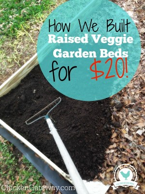 How To Build Raised Vegetable Garden Beds For $20!