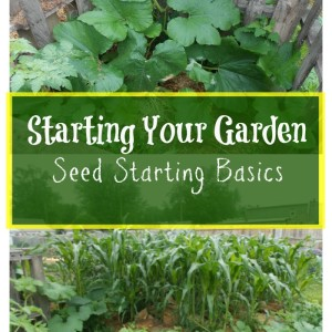 Starting Your Garden with Seed Starting Basics