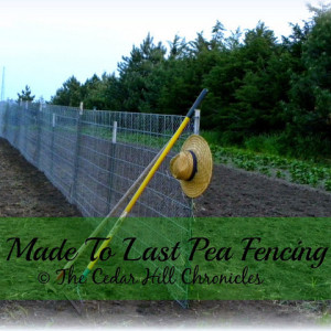 Pea Fencing 101 and The Homestead Garden