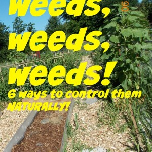 6 Ways to Control Weeds in the Garden, NATRUALLY!