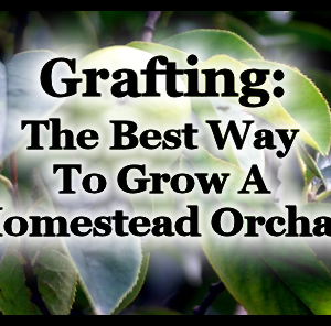 How to Grow an Affordable Homestead Orchard