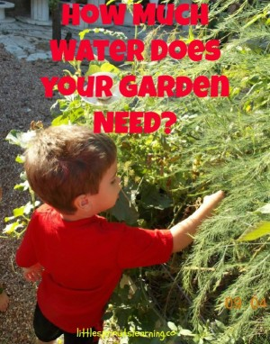 how much water does your garden need homestead bloggers network