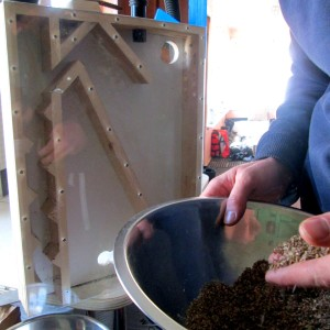 Build a Seed Cleaner to Improve your Seed-Saving