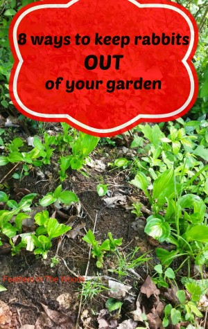 8 Ways to keep rabbits out of your garden - Homestead ...