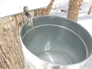 Maple Dollars & Cents: Planning Our Home Sugaring Operation
