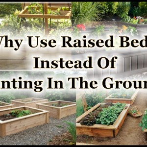 9 Reasons To Plant Your Garden In Raised Beds