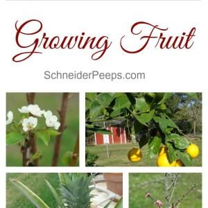 Growing Fruit on the Homestead
