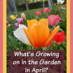 What's Growing on in the April Garden?