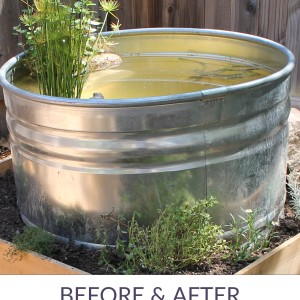 A Stock Tank Pond for the Kitchen Garden