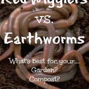 Red Wiggler Worms vs Earthworms (in composting and gardening)