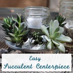 Easy DIY Succulent Centerpiece