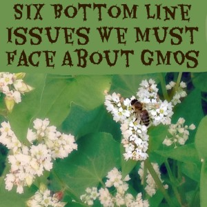 Six Bottom Line Issues We Must Face About GMOs