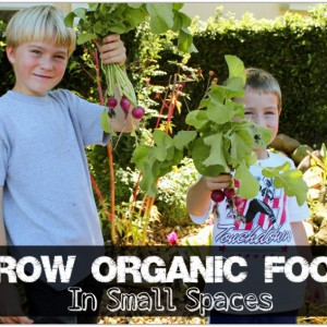 Grow Organic Food in Small Spaces