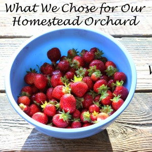 What We Chose for Our Homestead Orchard and Why