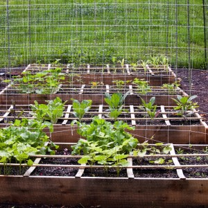 Raised Bed Square Foot Gardening