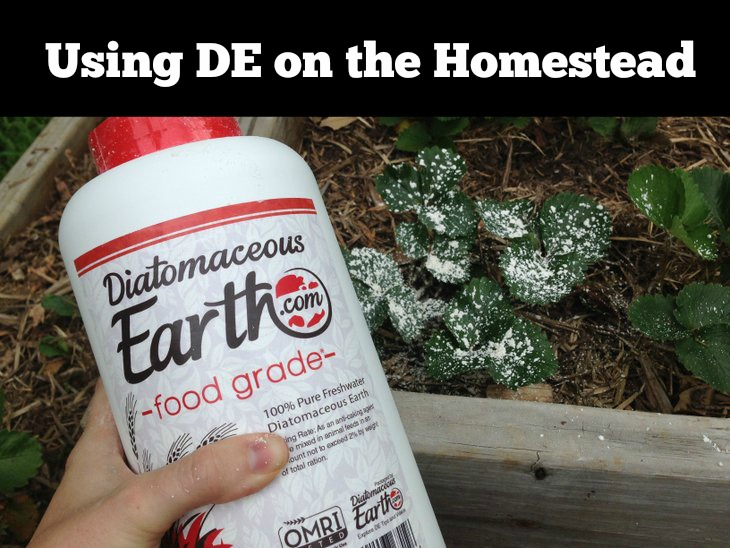 Using Diatomaceous Earth on the Homestead