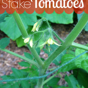 The Easy Way to Support Tomatoes