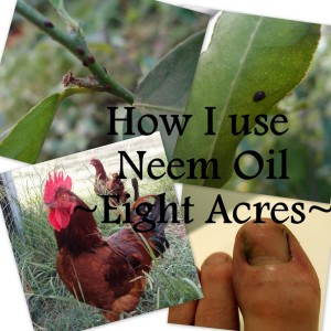 How I use neem oil