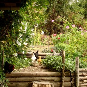 How to Get Started in Permaculture