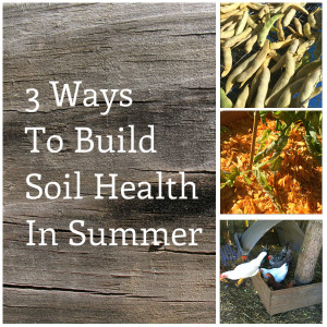 3 Ways to Build Soil Health In Summer