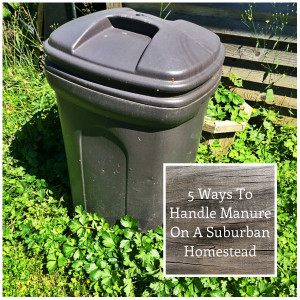 5 Ways to Handle Manure on a Suburban Homestead