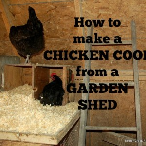 How to Make a Chicken Coop from a Garden Shed