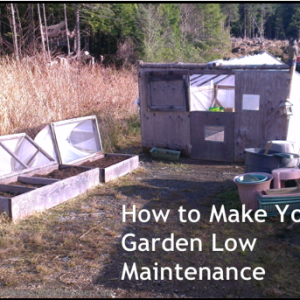 How to Make Your Garden Low Maintenance