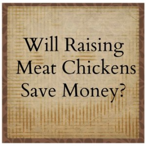 Will Raising Meat Chickens Save Money