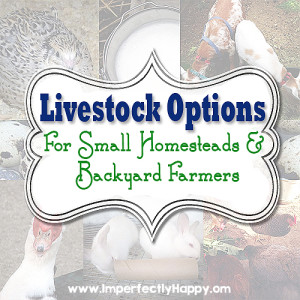 Backyard Livestock Options