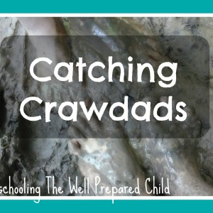 Catching Crawdads