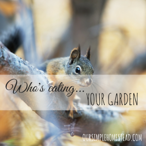 Who's Eating Your Garden?