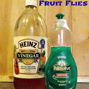 The Easy Way To Get Rid of Fruit Flies
