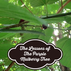 The Lessons of The Purple Mulberry Tree