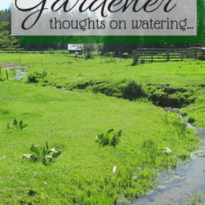 You Can Be A Great Gardener, Part Three – Thoughts on Watering