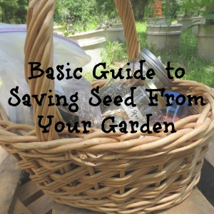 Basic Guide to Saving Seed From Your Garden