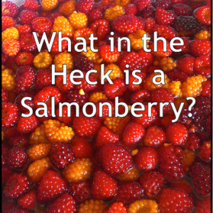 What-is-a-Salmonberry
