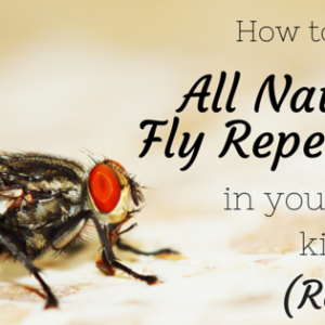 All Natural Homemade Fly Spray