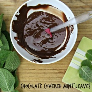 "Chocolate Covered Mint Leaves {or ""What to Do with All That Mint from My Garden""}"