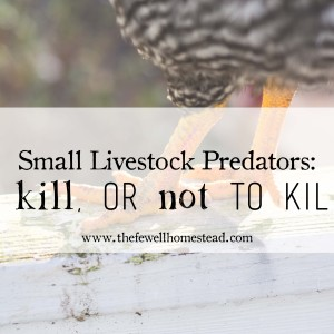 Small Livestock Predators | To kill or not to kill?