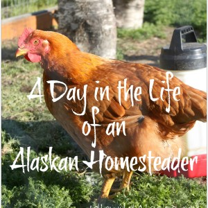 A Day in the Life of an Alaskan Homesteader