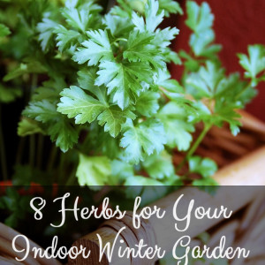 8 Herbs for Your Indoor Herb Garden