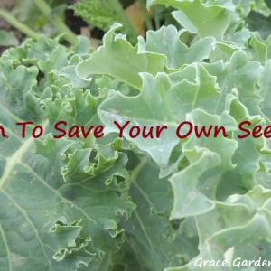 How To Save Your Kale Seeds