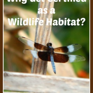 Why Get Certified as a Wildlife Habitat