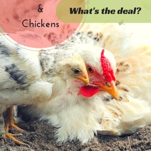 Diatomaceous Earth & Chickens: What's The Deal?